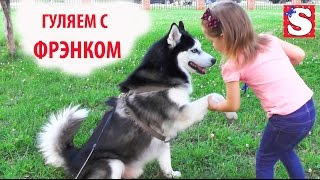 VLOG Сибирская хаски Фрэнк гуляем с собакой и катаемся на роликах My Little Pony видео для детей
