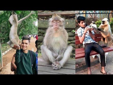 Monkey Funny TikTok video | It will make you laugh ?