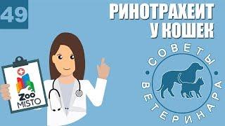 Инфекционный ринотрахеит у кошек |  Симптомы и профилактика ринотрахеита | Советы Ветеринара