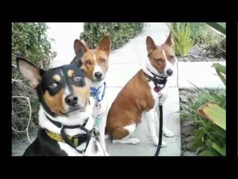 dog walker illinois pet resources chicago pet connect video