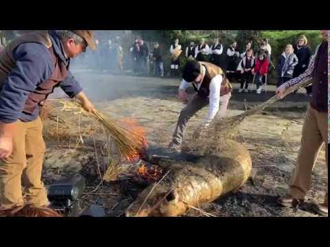 Botos celebra su tradicional Matanza do Porco