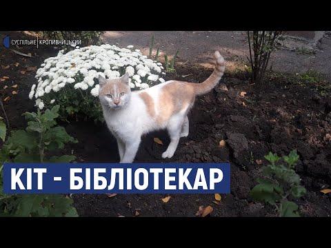 Суспільне Кропивницький: У Кропивницькому кіт працює помічником бібліотекаря