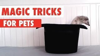 animal magic tricks