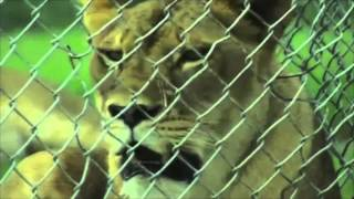 At A Glance Lion Country Safari In Loxahatchee Florida