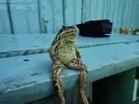 What Does The Frog Say Frog Sitting On The Bench By Cat