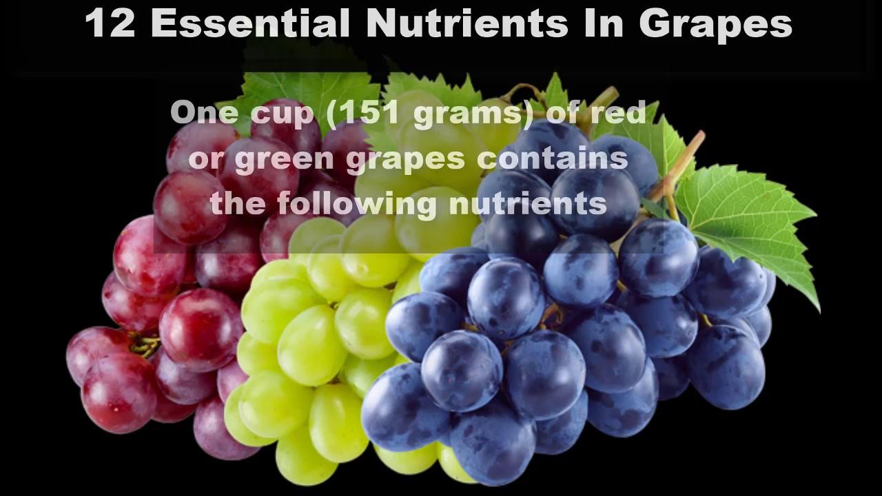 12 Essential Nutrients Found In G S Health Benefits