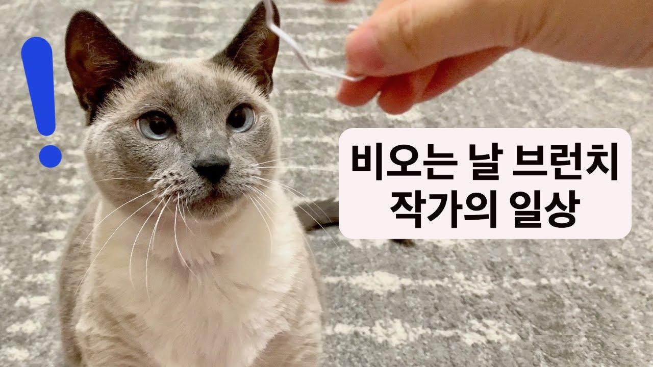 소나기 ASMR, 고양이가 있는 브런치 작가의 하루