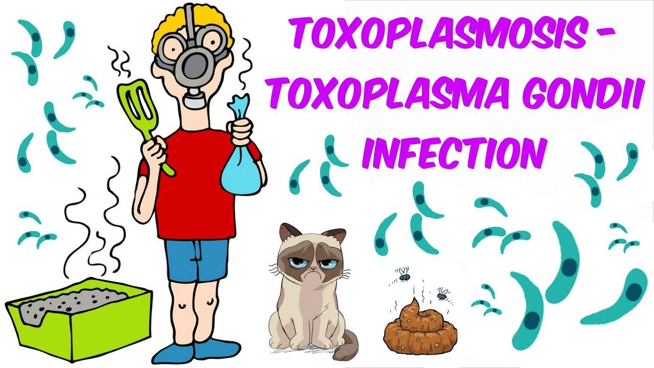 toxoplasma kezelése