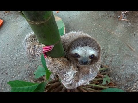 A Sloth With Pink Nails Youtube