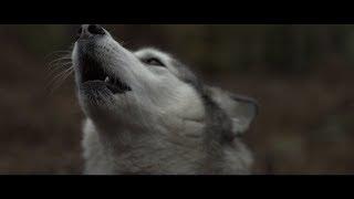 Смотреть клип Omer Balik - Stardust