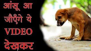 इस VIDEO को देख के आपकी आँखों में आँसू आ जाएगा || CHAINED UP FOR 10 YEARS & SEE WHAT HAPPENED