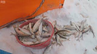 Зимняя рыбалка 2020 Ловим на удочку сорогу Крайний Север НАО