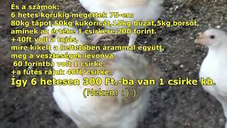 helminták csirkék kezelésében)