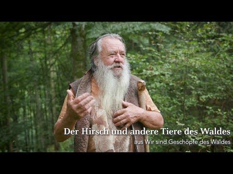 Der Hirsch und andere Tiere des Waldes