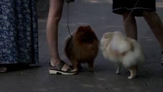 U news. Региональная выставка собак всех пород ранга САС