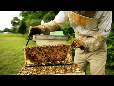 Why the US Economy Needs Bees