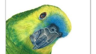 How to Paint a Parrot in Watercolor