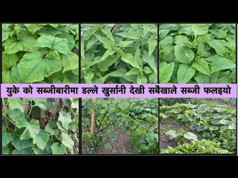 July Allotment update uk | different kind of vegetables growing & harvest | dalle khursani
