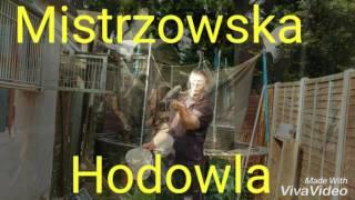 Gołębie Pocztowe Artura Pawłowskiego w UK. Mistrzowska Hodowla