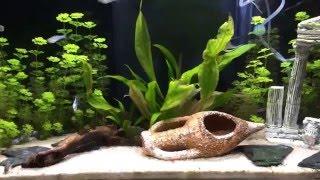 Como programar la luz de tu acuario paso a paso. |HD|