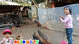 Nghịch ngan vịt trong vườn ngân hà cho gà ăn lấy u ụp gà ❤Ngân hà TV❤