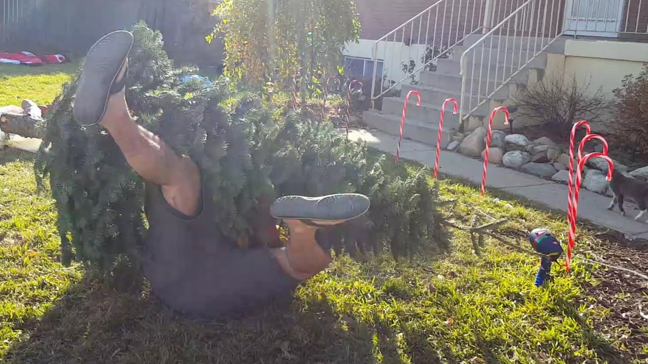 Kids Wanted The Biggest Christmas Tree At The Christmas Tree Lot  Original  - YouTube