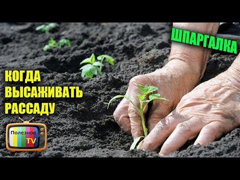 Как садить рассаду в теплице видео