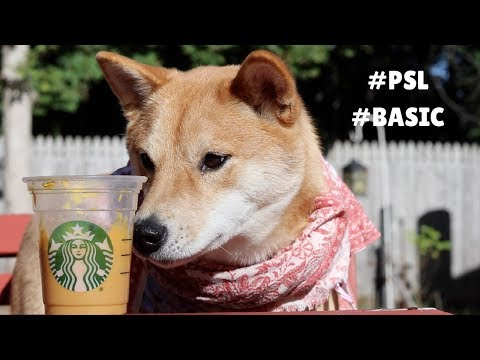 How To Make a Pumpkin Spice Latte for your #Basic Dog.