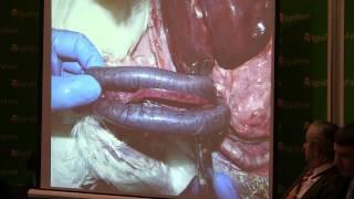 Диагностика инфекционных болезней индеек. Семинар по индейководству на выставке АгроФерма-2014