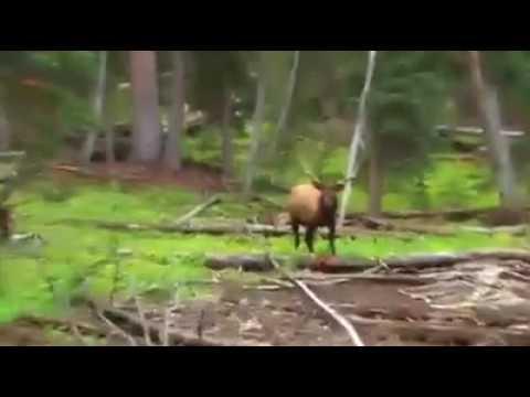 Deer hunter.. Rusa