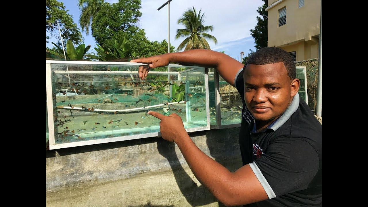 Cuidado de peces guppy con javier youtube for Criadero de peces goldfish