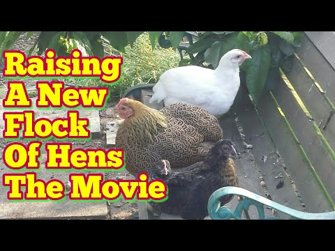 Complete Guide | From Egg To Hen 2! | The Movie
