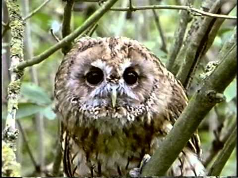 mundo incrível dos animais animais noturnos youtube