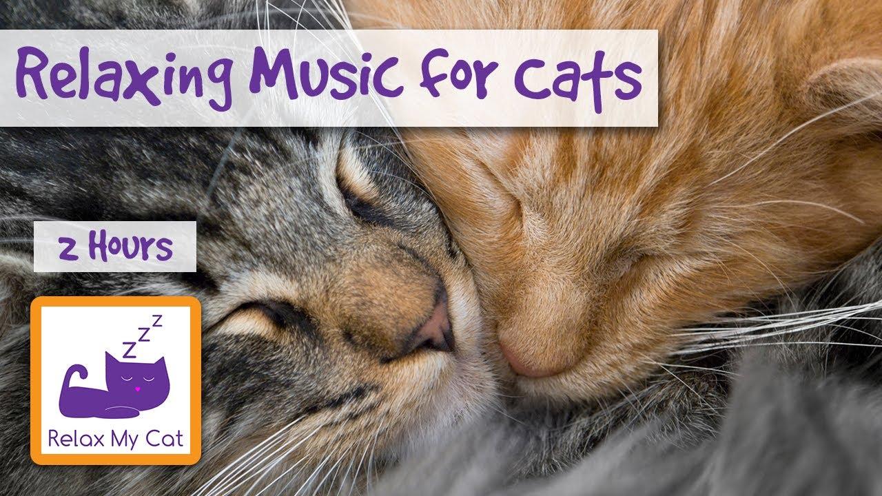 orange cat lentigo
