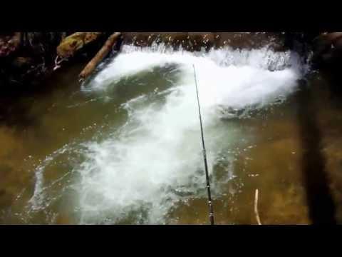 North Georgia Trout Fishing