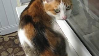 Кошка Кузя на подоконнике 42 -:)