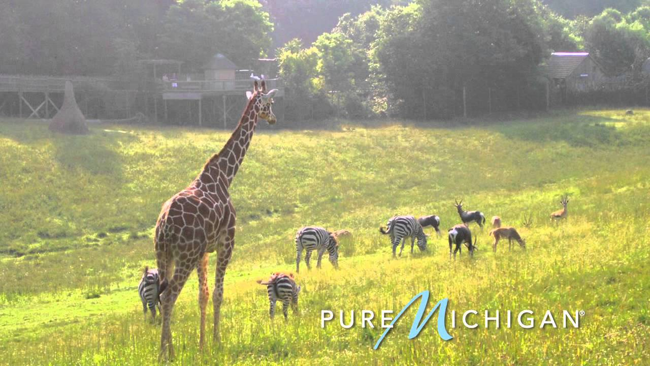 Binder Park Zoo In Battle Creek Pure Michigan Youtube