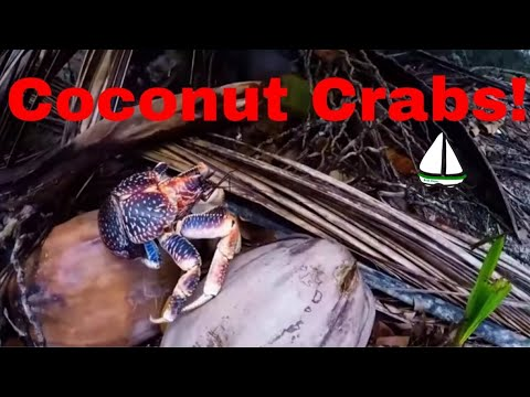 Coconut Crab Facts - How to Survive on a Desert Island - Part 3 of 3-Patrick Childress Sailing #18