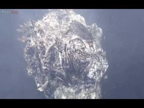 Cientos de formas de vida nunca antes vistas viven en este volcàn submarino