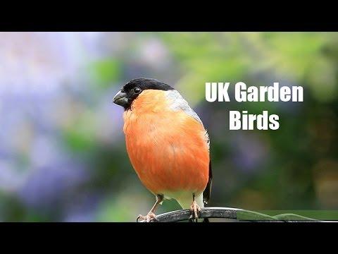 My UK Wildlife Garden Birds