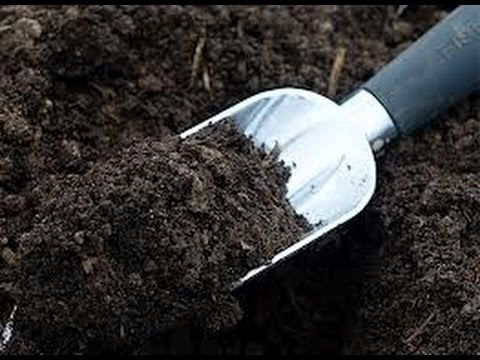 The Simplest Way To Turn Your Soil Into Black Gold