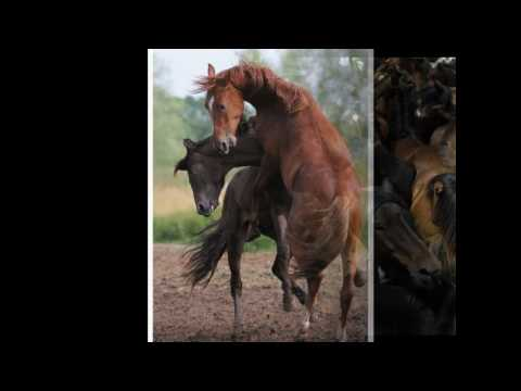 garbage - wild horses (*gische)