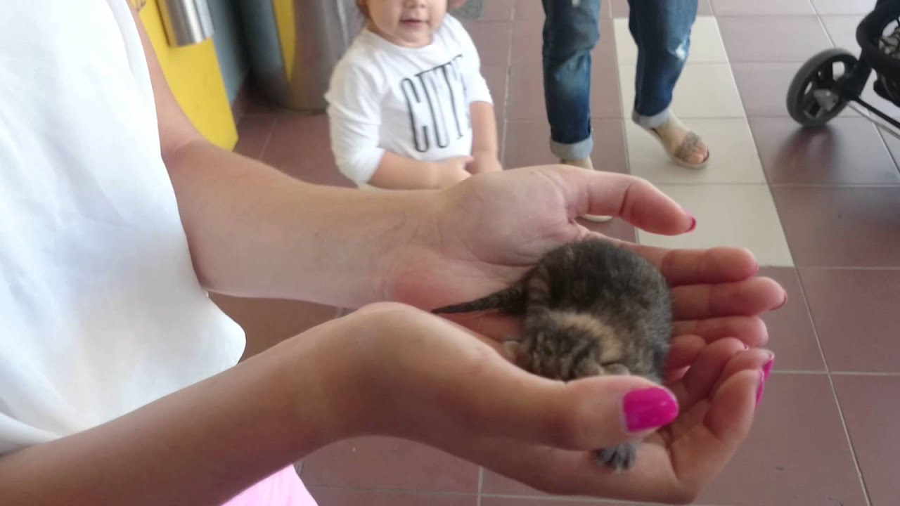 +++Paar stunden alte - Neugeborene babykatzen ( BABY CAT)