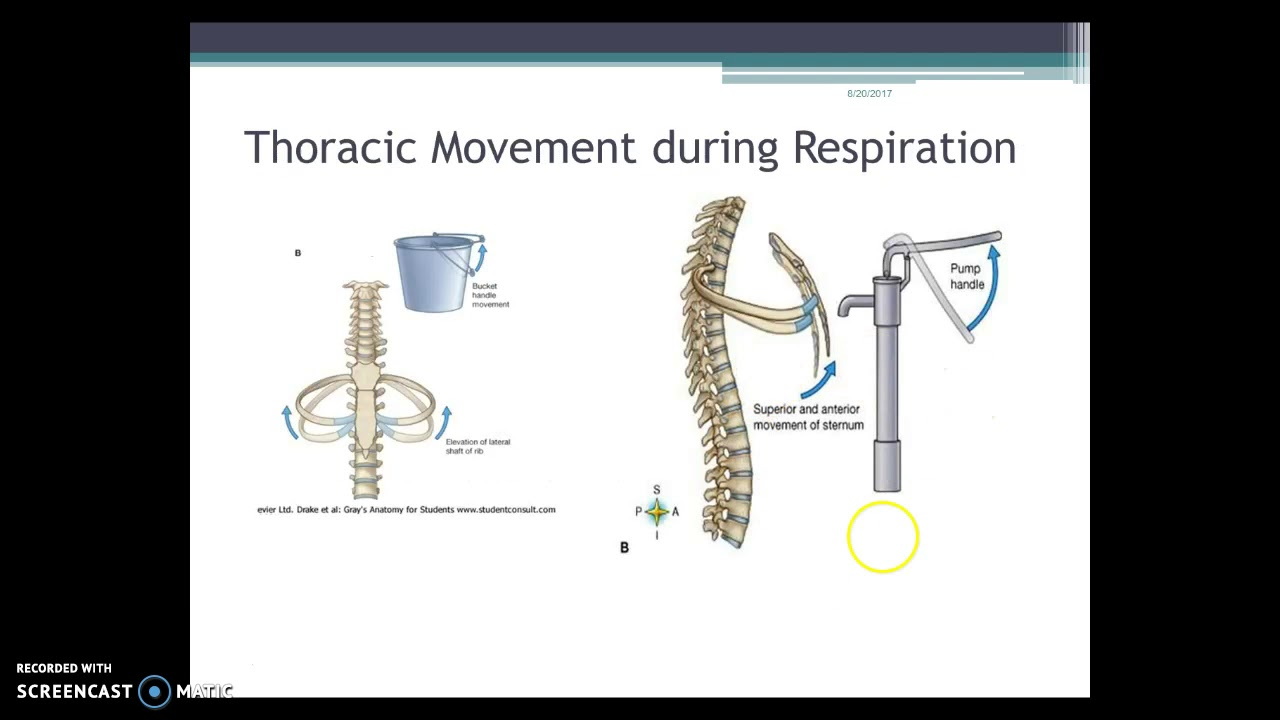 Thoracic Spine Anatomy Review Youtube