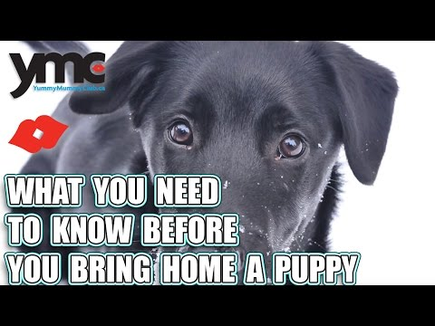 What You Need To Know Before You Bring Home A Puppy