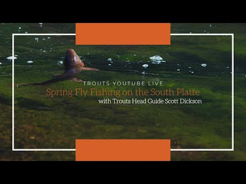 Trouts Live | Spring Fly Fishing On The South Platte River With Scott Dickson