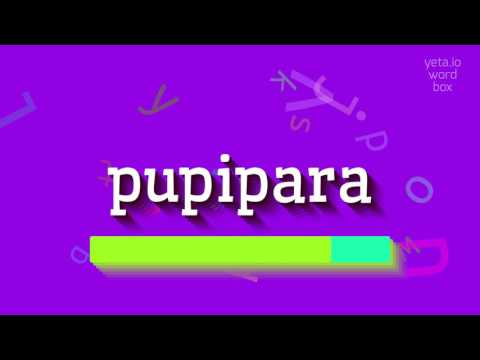 "How to say ""pupipara""! (High Quality Voices)"