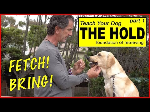 Teach Your Dog To Retrieve Part 1 - The HOLD - The BASICS To FETCH Or BRING - Dog Training Video