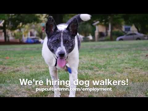 We're Hiring Dog Walkers and Pet Sitters!