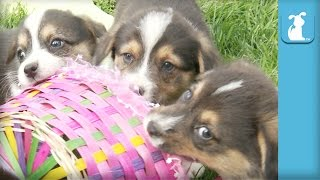 Kittens and Puppies - ZOMG!